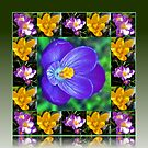 Crocus Collage in Reflection Frame von BlueMoonRose