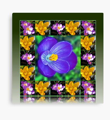 Crocus Collage in Reflection Frame Leinwanddruck