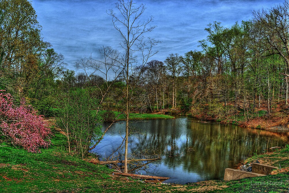 Springtime At The Pond by Lanis Rossi