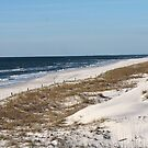 Cape San Blas Shoreline in Florida by Tranquility