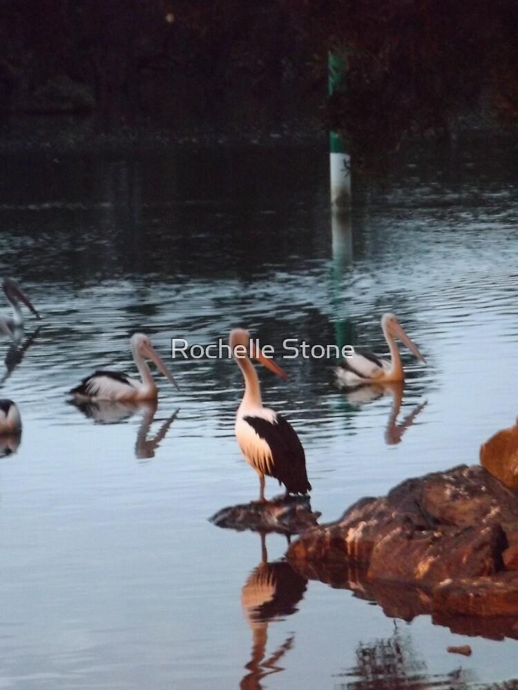 Pelicans On Dusk by Rochelle Stone