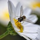 Sweet Nectar III by Edge-of-dreams