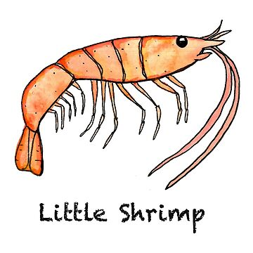 Little Shrimp by BestFish