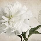 White peony whispers by IngeHG