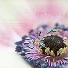 White anemone heart by IngeHG