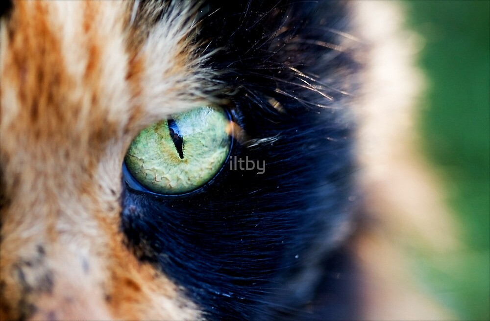 The Good Eye by iltby