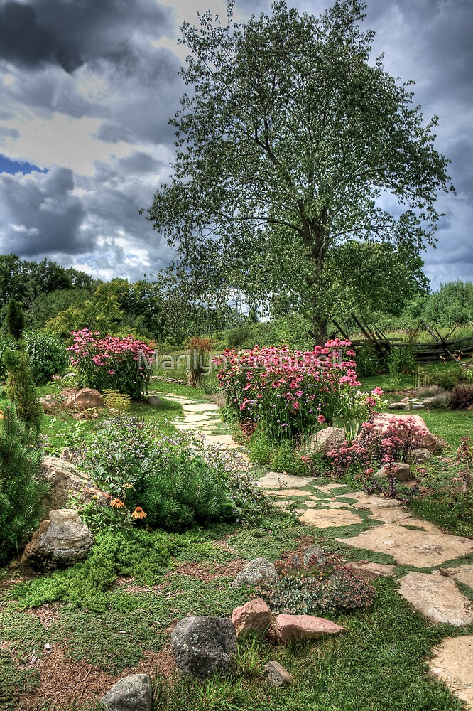 The Spindletree Echinacea Garden Path by Marilyn Cornwell
