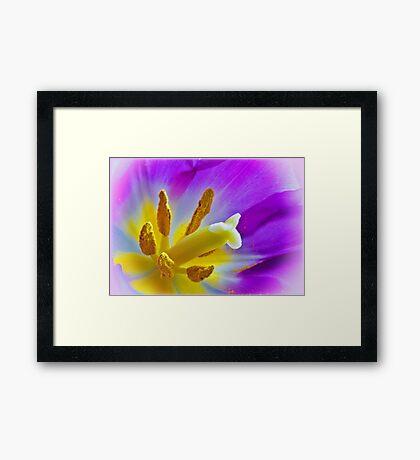 Tulip Central Framed Print