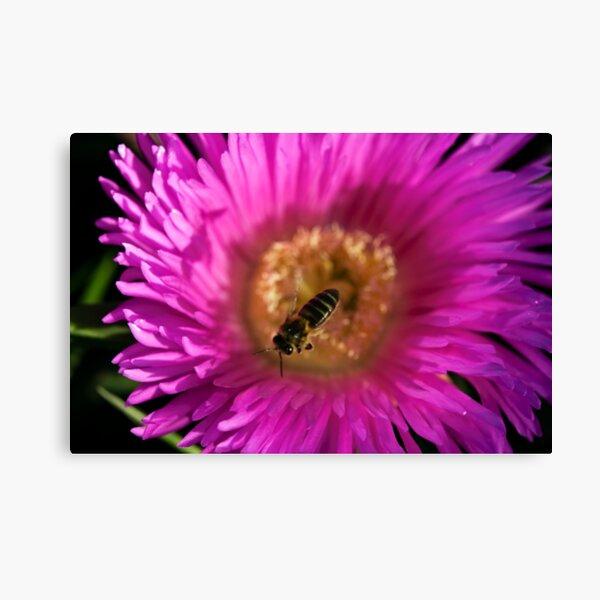 flying bee abeja volando Canvas Print