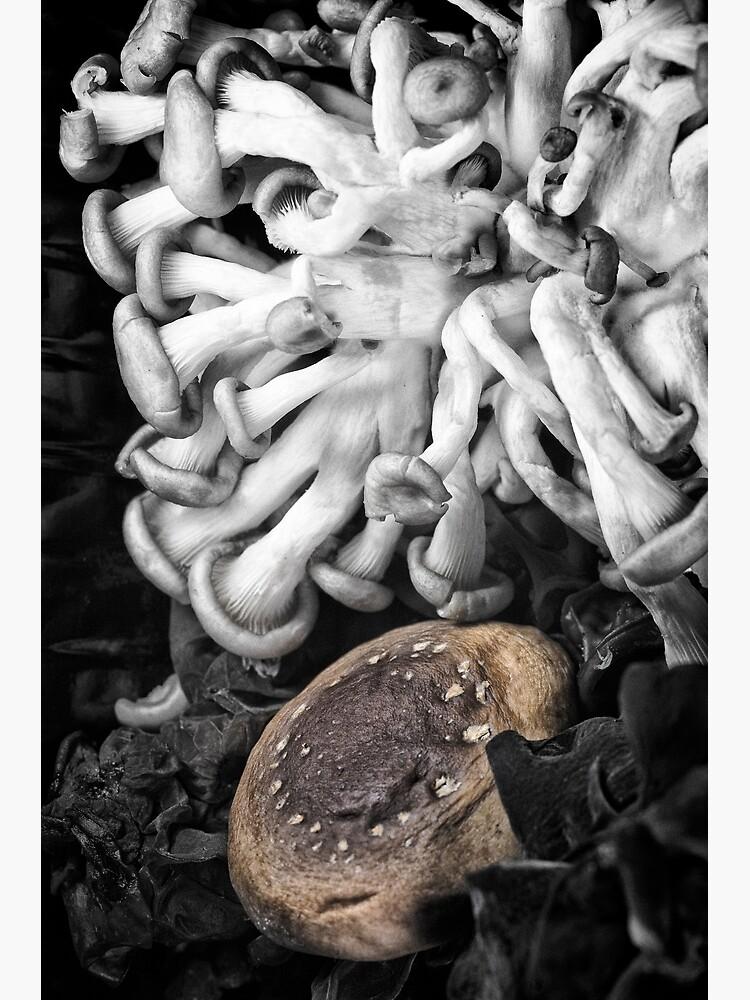 Japanese Mushrooms by fardad