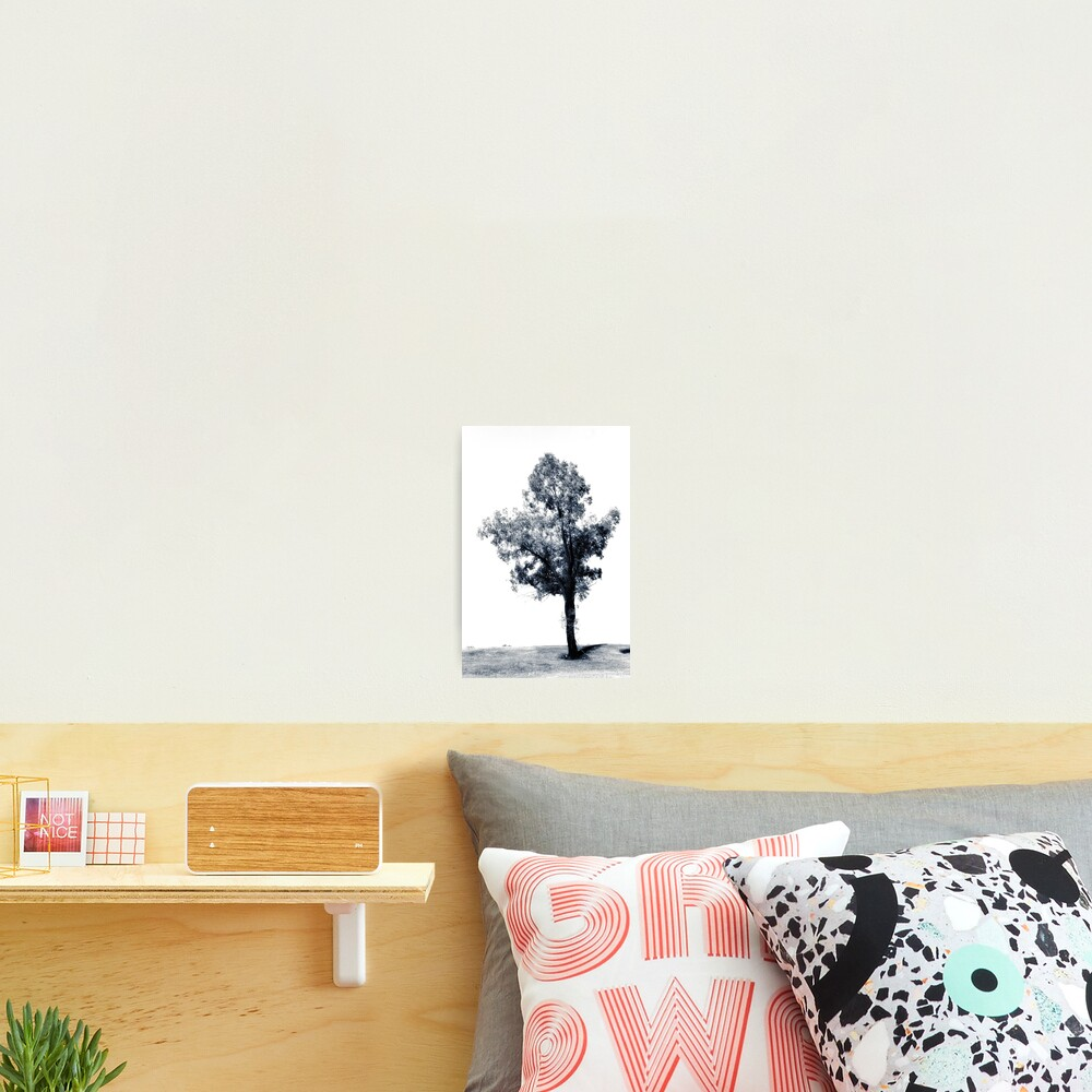 Single tree on the hill Photographic Print