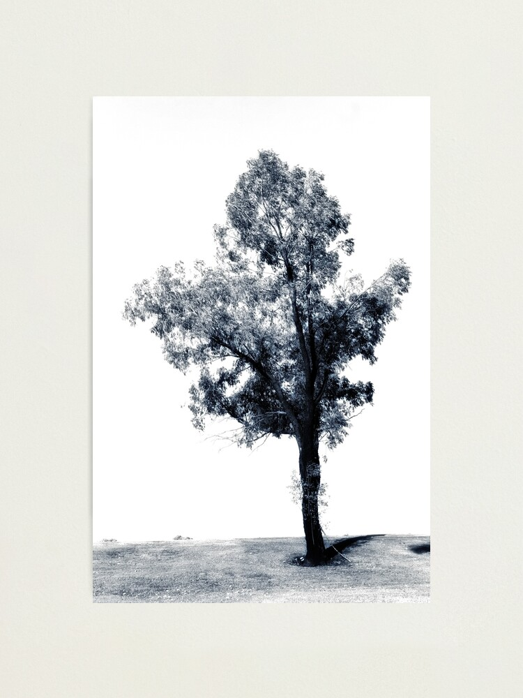 Alternate view of Single tree on the hill Photographic Print