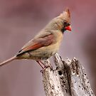 Northern Cardinal Female by Gary Fairhead