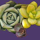 Succulent Lemon by redqueenself