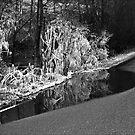 Roadside ice by Tony  Glover