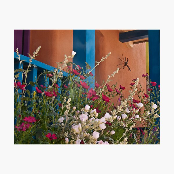 Flowers in the Barrio Photographic Print