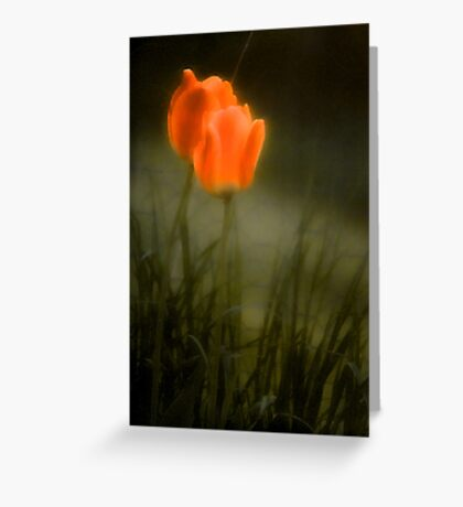 The Color of Spring - Bridgton,  Maine Greeting Card