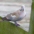 Posing On The Fence by Deborah  Benoit