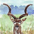 Greater Kudu (Tragelaphus strepsiceros) by Maree Clarkson