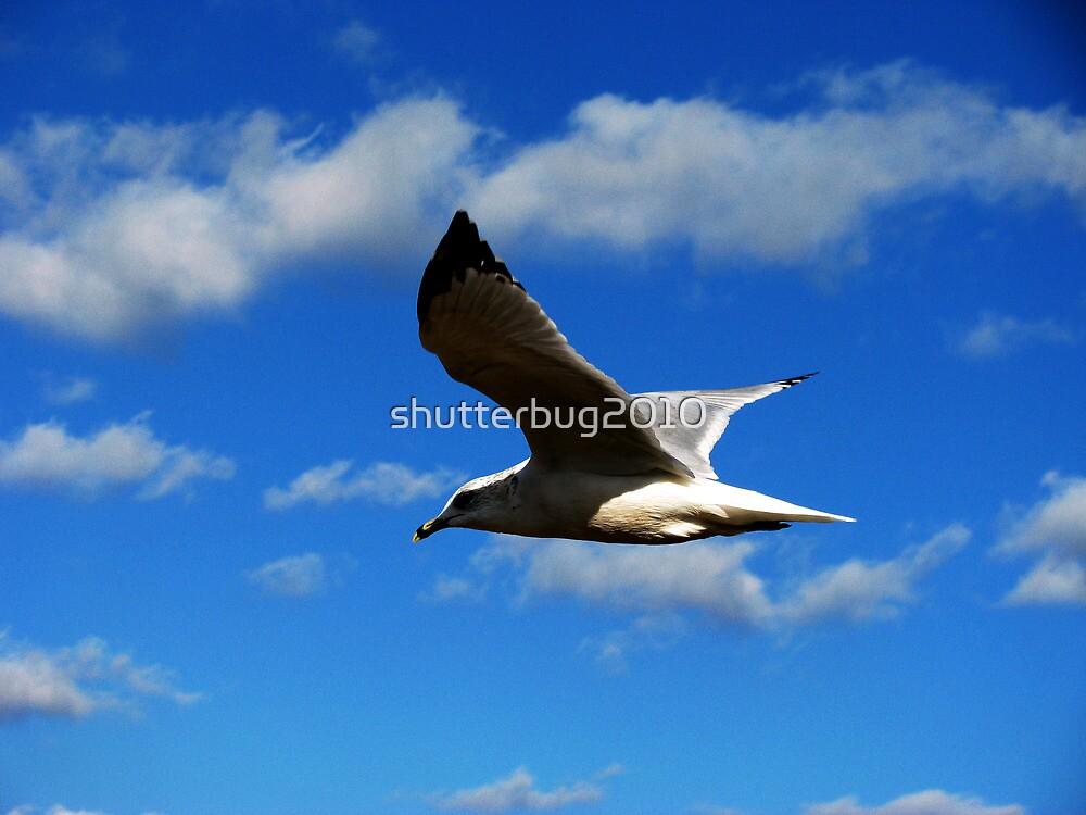Glide by shutterbug2010