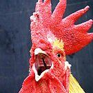 Cock-A-Doodle-Dooo by PhoenixArt