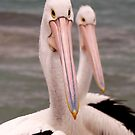 A Pair of Pelicans by John Wallace
