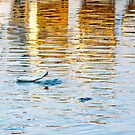 Flying fish by JohnW