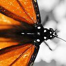 Butterfly colors by Adam Jones