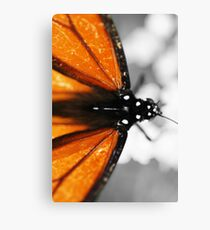 Butterfly colors Canvas Print