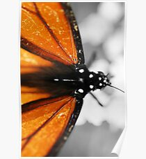 Butterfly colors Poster