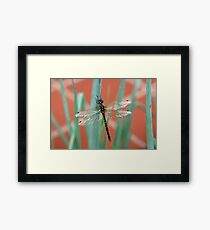 Dragonfly content on Shallots Framed Print
