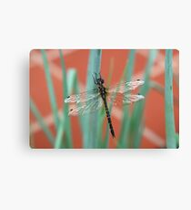 Dragonfly content on Shallots Canvas Print