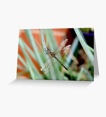 Dragonfly on Shallots 2 Greeting Card