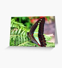 Blue Triangle Butterfly Greeting Card