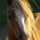 Nuttcracker Stallion by holistichorses