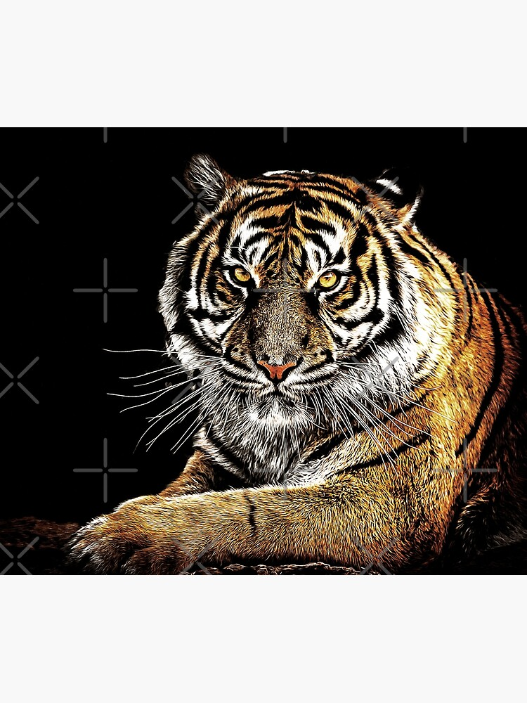 Tiger by perkinsdesigns