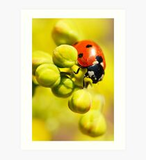 Spring in yellow and red Art Print
