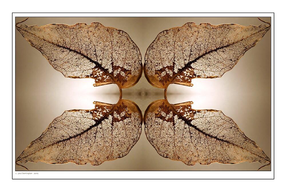 Lacework by Paul Barrington
