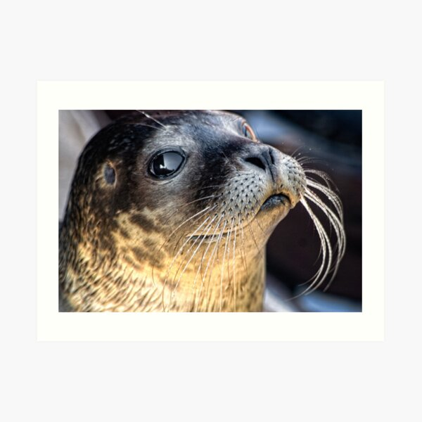 Check Out My Whiskers! Art Print