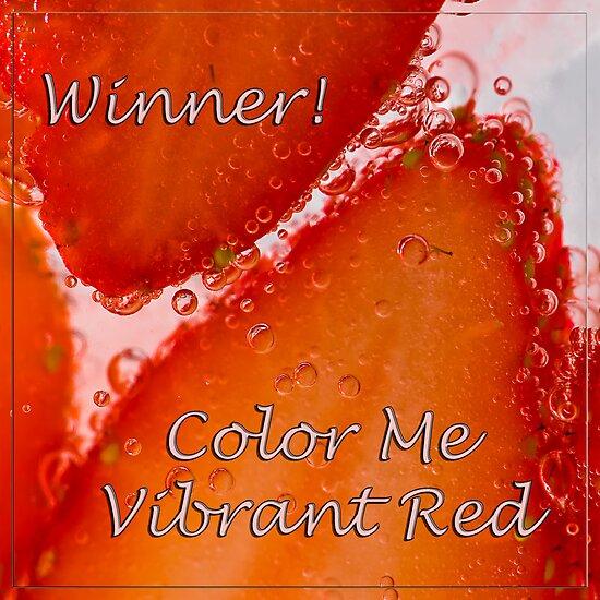 Challenge Winner! by Jacinthe Brault