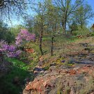 The Redbuds of Rock Hollow by Dennis Jones - CameraView