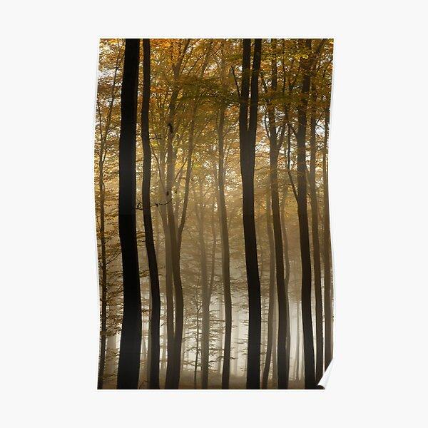 Forêt en automne Poster