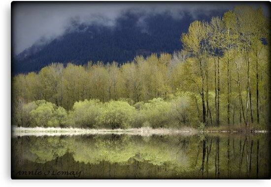 Trees of Spring by Annie Lemay  Photography