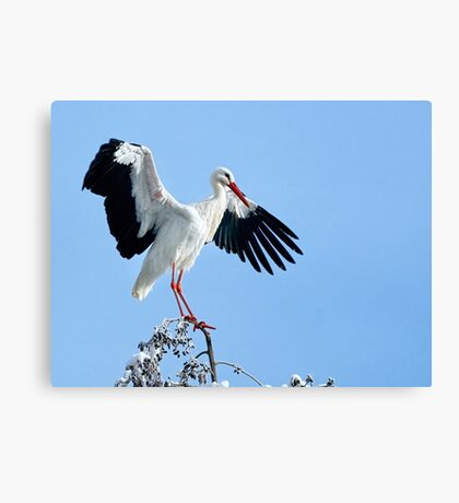 White Stork On Snow Covered Tree Canvas Print