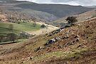 Langstrothdale Valley by SteveMG