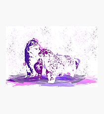 Affectionate Snow Leopards Photographic Print