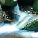 Woodland water at Glencree No4 by Martina Fagan
