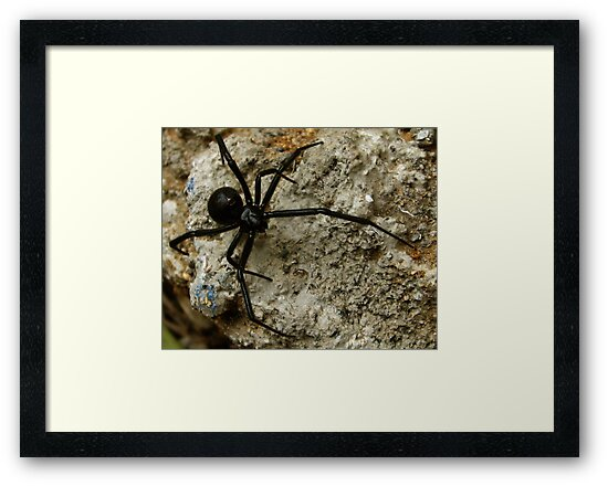 Just a little spider by TeriLee