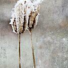 Tribute to Winter by IndigoMidnight