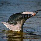 Tolles Blau mit ausgebreiteten Flügeln und Kopf im Wasser begraben von TJ Baccari Photography